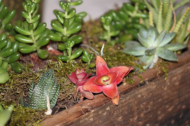 3 צמחים שיהפכו כל עיצוב גינות בירושלים למוצלח יותר