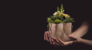 פרחים באינטרנט