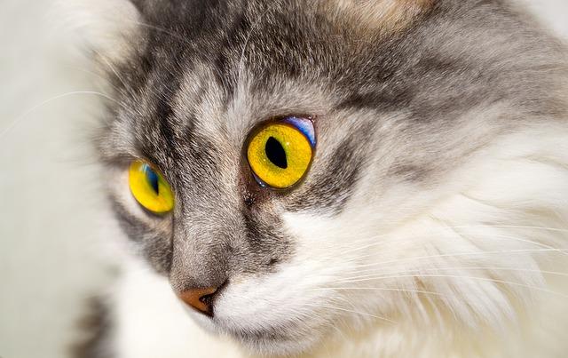 החתולה מתגרדת עד זוב דם? כנראה שהיא אלרגית למשהו