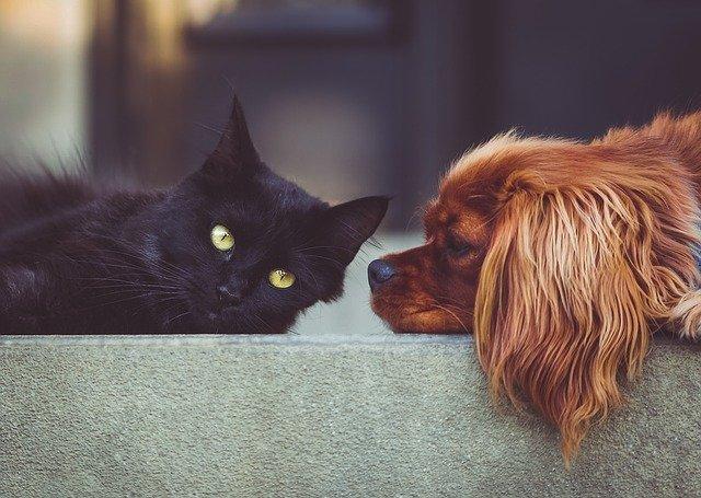 רויאל קנין – מזון סופר פרימיום לכלבים וחתולים