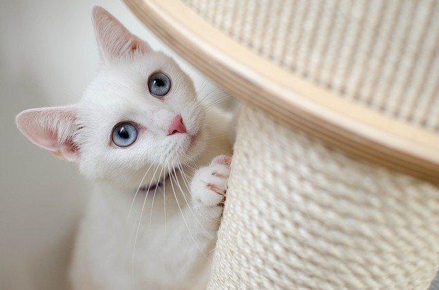 מתקני גירוד לחתולים – לשם מה זה טוב?