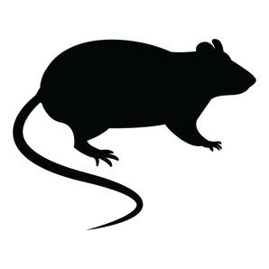 האם עכברושים מסוכנים?