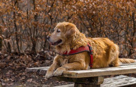 כלוב טיסה לכלב שלכם – הדרך הבטוחה לעבור את המסע