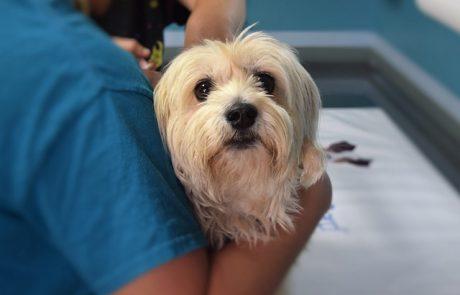 כלב טרייר טיבטי – כל מה שצריך לדעת