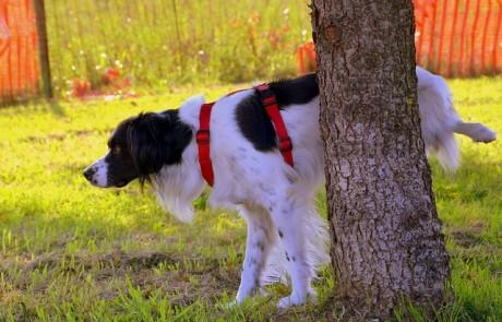 איך עושים אימון כלבים לעשיית צרכים בחוץ?