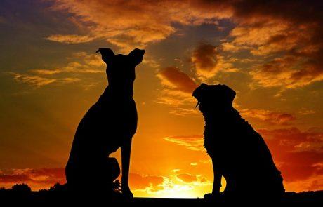 קרמטוריום לכלבים
