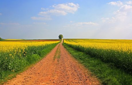 שיקום קרקעות בישראל: כל הפרויקטים והעדכונים במקום אחד