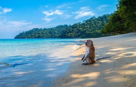 תאילנד באפריל
