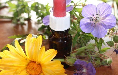 רשימת צמחי מרפא שתסייע לכם לחזק את המערכת החיסונית שלכם